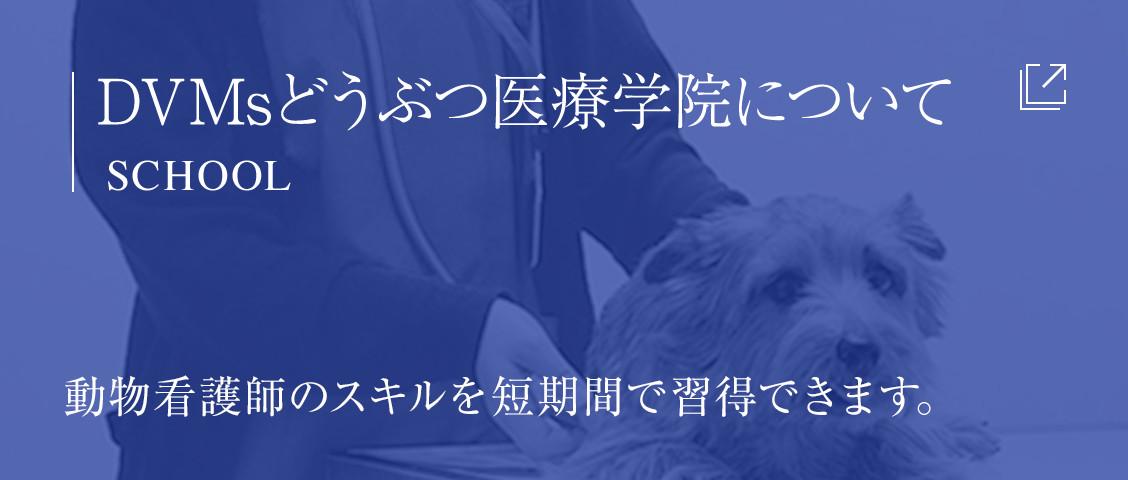 DVMsどうぶつ医療学院についてSCHOOL動物看護師のスキルを短期間で習得できます。