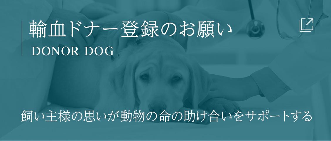 輸血ドナー犬登録のお願いDonor dog飼い主様の思いが動物の命の助け合いをサポートする